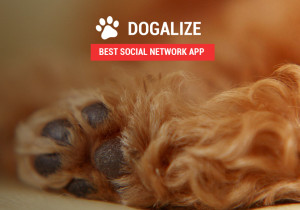 Internet & Mobile: l'Italia con Dogalize in nomination ai The Webby Awards